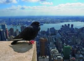 oiseau toit