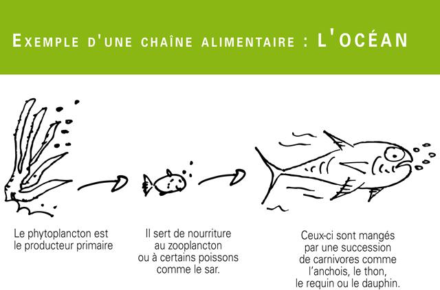 Les écosystèmes De La Planète Les Cahiers Du Dd Outil Complet